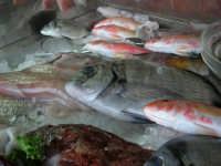 pesci in esposizione dinanzi al Ristorante La Cambusa - 3 dicembre 2006   - Castellammare del golfo (1918 clic)