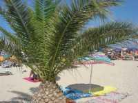 spiaggia - 8 agosto 2009   - San vito lo capo (1156 clic)