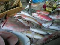 pesci in esposizione dinanzi al Ristorante La Cambusa - 3 dicembre 2006  - Castellammare del golfo (1778 clic)