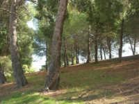 LAGO POMA - bosco ai margini del lago artificiale nei pressi di Partinico - 5 ottobre 2007   - Partinico (2237 clic)