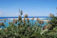 vista sul porto - 5 ottobre 2008   - Balestrate (1081 clic)
