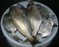 pesci del nostro mare (saraghi e manciaracina), appena pescati - 14 agosto 2007  - Alcamo marina (18565 clic)