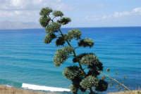 vista sul golfo di Castellammare - 5 ottobre 2008   - Balestrate (921 clic)