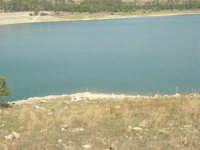LAGO POMA - lago artificiale nei pressi di Partinico - airone cenerino - 5 ottobre 2007   - Partinico (1616 clic)