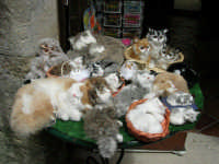 esposizione di gattini di peluche - 25 aprile 2006  - Erice (1743 clic)