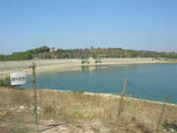 LAGO POMA - lago artificiale nei pressi di Partinico - Diga Jato - airone cenerino - 5 ottobre 2007   - Partinico (11101 clic)