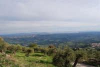 panorama con uliveto in primo piano - 9 novembre 2008   - Caltabellotta (1669 clic)