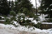 neve sul monte Bonifato - Riserva Naturale Orientata Bosco d'Alcamo - 15 febbraio 2009   - Alcamo (1800 clic)