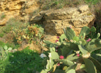la costa - spiaggia di ponente - 26 ottobre 2008  - Balestrate (1135 clic)