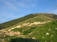 Montagna Grande - bosco - 21 febbraio 2009   - Fulgatore (3286 clic)