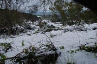 neve sul monte Bonifato - Riserva Naturale Orientata Bosco d'Alcamo - 15 febbraio 2009   - Alcamo (2281 clic)
