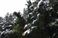 neve sul monte Bonifato - Riserva Naturale Orientata Bosco d'Alcamo - 15 febbraio 2009   - Alcamo (2084 clic)