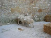 Epifania drammatizzata con quadri viventi a Salemi - durante le prove - 6 gennaio 2009   - Salemi (2747 clic)