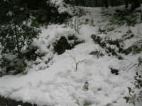 neve sul monte Bonifato - Riserva Naturale Orientata Bosco d'Alcamo - 15 febbraio 2009   - Alcamo (2059 clic)