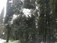 neve sul monte Bonifato - Riserva Naturale Orientata Bosco d'Alcamo - 15 febbraio 2009   - Alcamo (1954 clic)