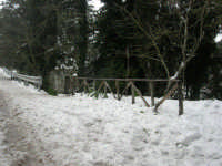 neve sul monte Bonifato - Riserva Naturale Orientata Bosco d'Alcamo - La Funtanazza - 15 febbraio 2009   - Alcamo (2840 clic)
