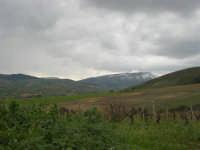 panorama dalle falde del monte Bonifato fino ai monti di Castellammare innevati - 15 febbraio 2009   - Alcamo (2435 clic)