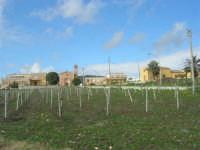 frazione di Buseto Palizzolo - 18 gennaio 2009   - Bruca (5162 clic)