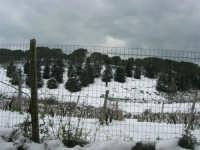 neve sul monte Bonifato - 15 febbraio 2009   - Alcamo (2066 clic)