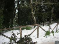 neve sul monte Bonifato - Riserva Naturale Orientata Bosco d'Alcamo - 15 febbraio 2009   - Alcamo (1720 clic)