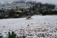 neve in contrada Tre Noci - 14 febbraio 2009  - Alcamo (2512 clic)