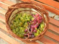 paniere con uva (di tre diverse qualità) proveniente da Calatafimi Segesta - 5 settembre 2008   - Castellammare del golfo (1406 clic)