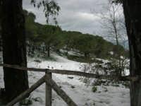 neve sul monte Bonifato - 15 febbraio 2009   - Alcamo (2809 clic)