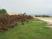 Tonnara - ancore e barche - 16 novembre 2008   - Bonagia (781 clic)