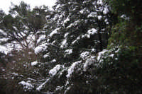 neve sul monte Bonifato - Riserva Naturale Orientata Bosco d'Alcamo - 15 febbraio 2009   - Alcamo (2005 clic)