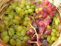 paniere con uva (di tre diverse qualità)  proveniente da Calatafimi Segesta - 5 settembre 2008   - Castellammare del golfo (1514 clic)