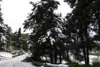 neve sul monte Bonifato - Riserva Naturale Orientata Bosco d'Alcamo - 15 febbraio 2009   - Alcamo (2015 clic)