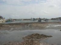 il porticciolo invaso dalle alghe - 1 marzo 2009  - Marinella di selinunte (1633 clic)