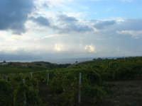 tra terra e cielo: la campagna a sera, vigneti e vista sul golfo di Castellammare - 7 ottobre 2007   - Alcamo (594 clic)