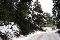 neve sul monte Bonifato - Riserva Naturale Orientata Bosco d'Alcamo - 15 febbraio 2009   - Alcamo (1841 clic)