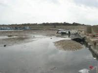 il porticciolo invaso dalle alghe - 1 marzo 2009  - Marinella di selinunte (1548 clic)