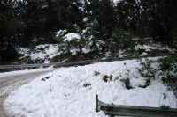 neve sul monte Bonifato - Riserva Naturale Orientata Bosco d'Alcamo - 15 febbraio 2009   - Alcamo (1783 clic)