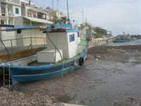 il porticciolo invaso dalle alghe - 1 marzo 2009  - Marinella di selinunte (1708 clic)