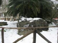 neve sul monte Bonifato - Riserva Naturale Orientata Bosco d'Alcamo - 15 febbraio 2009   - Alcamo (2321 clic)