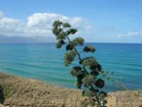 vista sul golfo di Castellammare - 5 ottobre 2008  - Balestrate (945 clic)