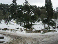 neve sul monte Bonifato - Riserva Naturale Orientata Bosco d'Alcamo - 15 febbraio 2009   - Alcamo (1906 clic)
