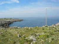 Capo San Vito - la costa rocciosa ed il mare - 10 maggio 2009   - San vito lo capo (1186 clic)