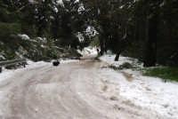 neve sul monte Bonifato - Riserva Naturale Orientata Bosco d'Alcamo - 15 febbraio 2009   - Alcamo (2265 clic)