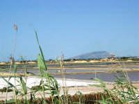 Saline Infersa nella Riserva delle Isole dello Stagnone di Marsala - all'orizzonte il monte Erice - 25 maggio 2008    - Marsala (1000 clic)