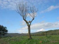 frazione di Buseto Palizzolo - un teschio sull'albero spoglio - 18 gennaio 2009   - Bruca (12398 clic)