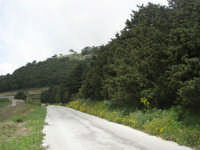 monte Erice - ai margini del bosco - 1 maggio 2009  - Erice (2084 clic)