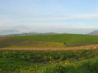 paesaggio campestre - 21 febbraio 2009   - Fulgatore (4681 clic)