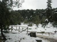 neve sul monte Bonifato - Riserva Naturale Orientata Bosco d'Alcamo - 15 febbraio 2009   - Alcamo (1998 clic)