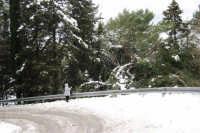 neve sul monte Bonifato - Riserva Naturale Orientata Bosco d'Alcamo - 15 febbraio 2009   - Alcamo (1995 clic)