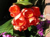 Fiori del nostro giardino - 3 aprile 2006  - Alcamo (1325 clic)