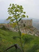 Quartiere Spagnolo e panorama - in primo piano una pianta di fellandrio o finocchio selvatico - 25 aprile 2006  - Erice (4167 clic)